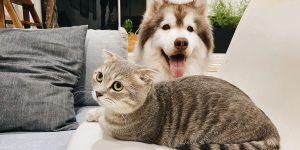 Choosing Your Pet Food