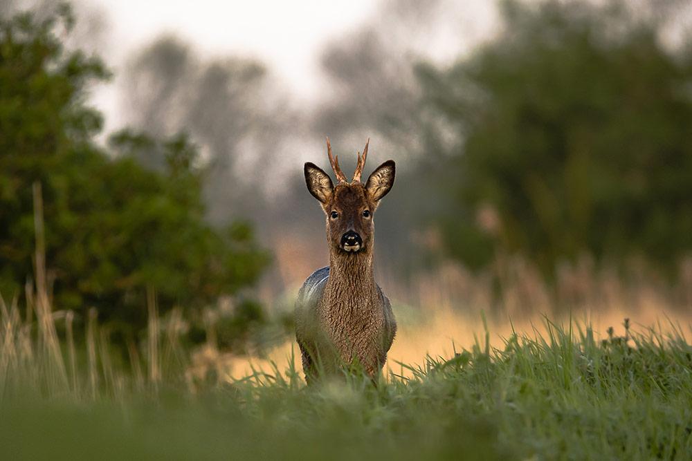 Fenland Wildlife