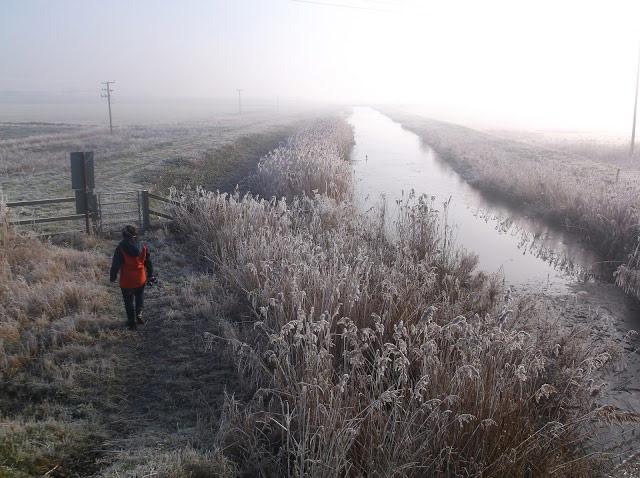 Landscape of Fenland