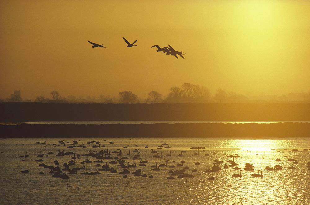 Visit an RSPB Reserve