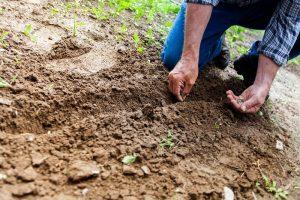Your Garden in March