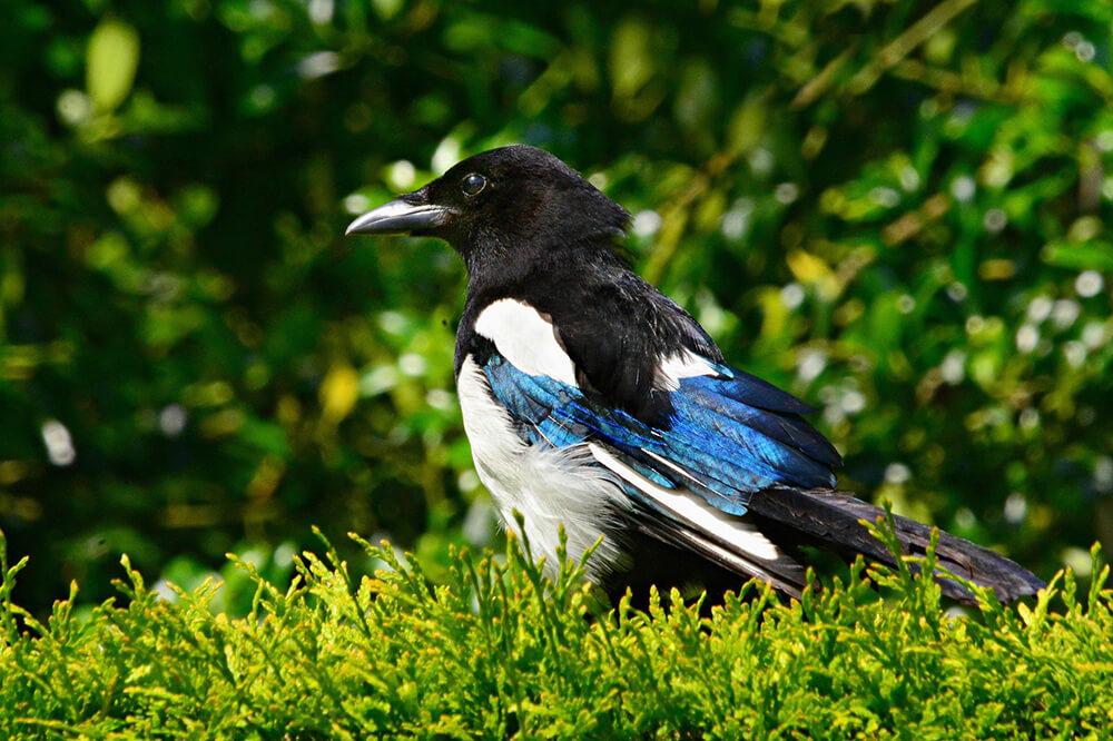 Big Garden Birdwatch Results