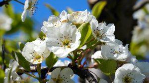 Your Garden in May